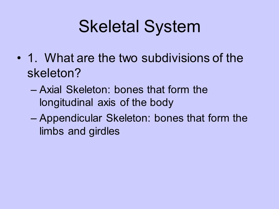 Skeletal System 1. What are the two subdivisions of the skeleton? –Axial Skeleton: bones that form the longitudinal axis of the body –Appendicular Ske