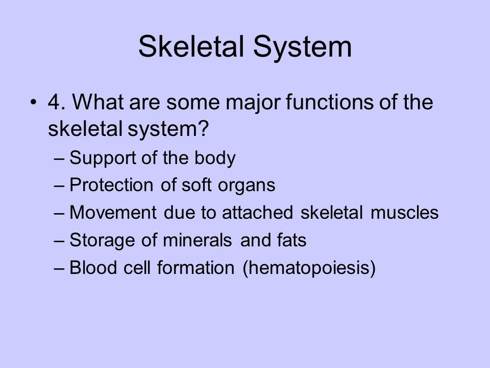 Skeletal System 4. What are some major functions of the skeletal system? –Support of the body –Protection of soft organs –Movement due to attached ske