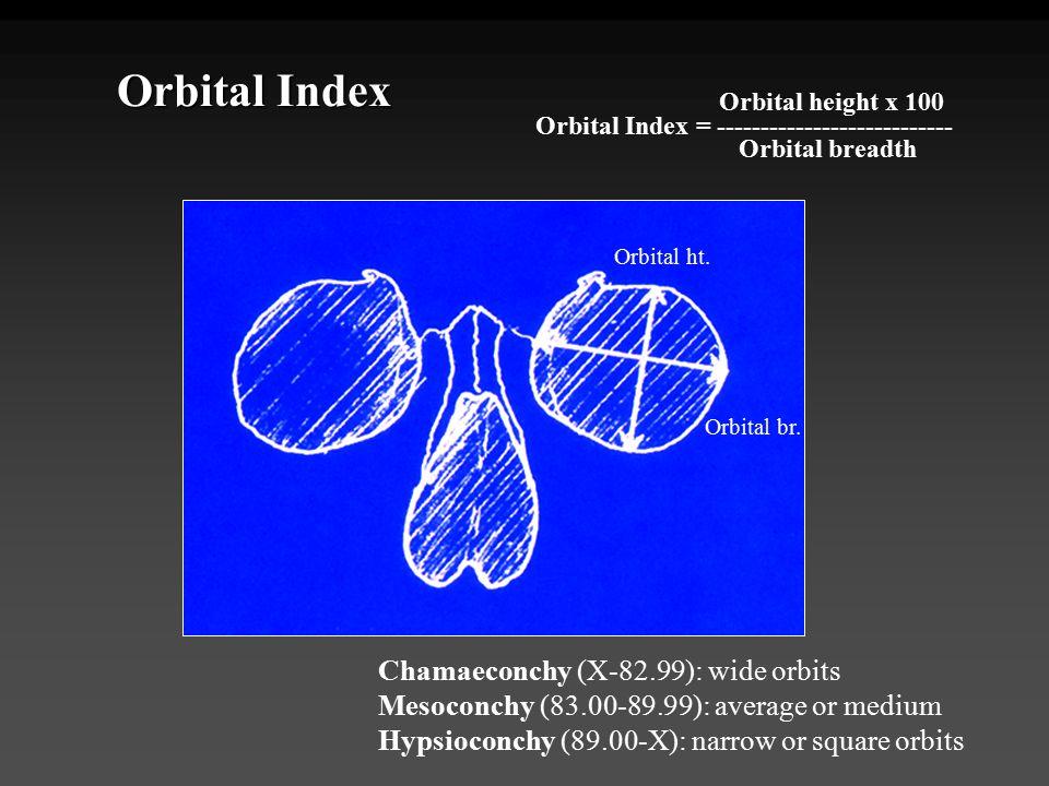 Orbital Index Chamaeconchy (X-82.99): wide orbits Mesoconchy (83.00-89.99): average or medium Hypsioconchy (89.00-X): narrow or square orbits Orbital