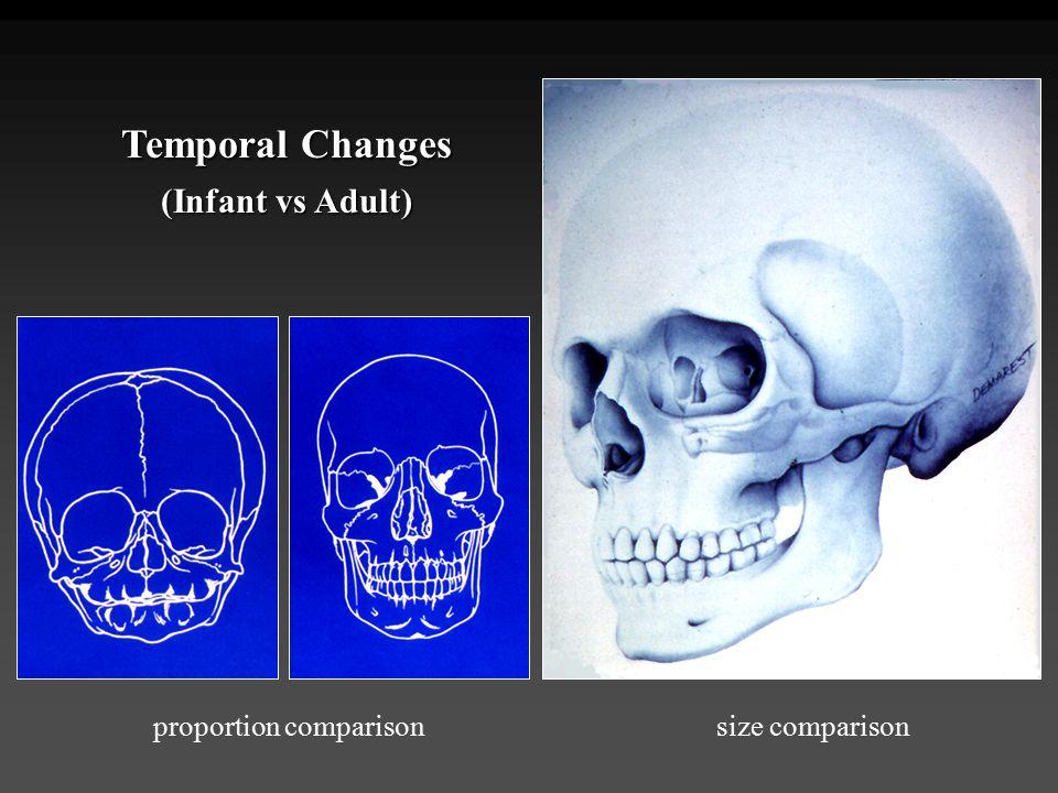 Temporal Changes (Infant vs Adult) proportion comparisonsize comparison