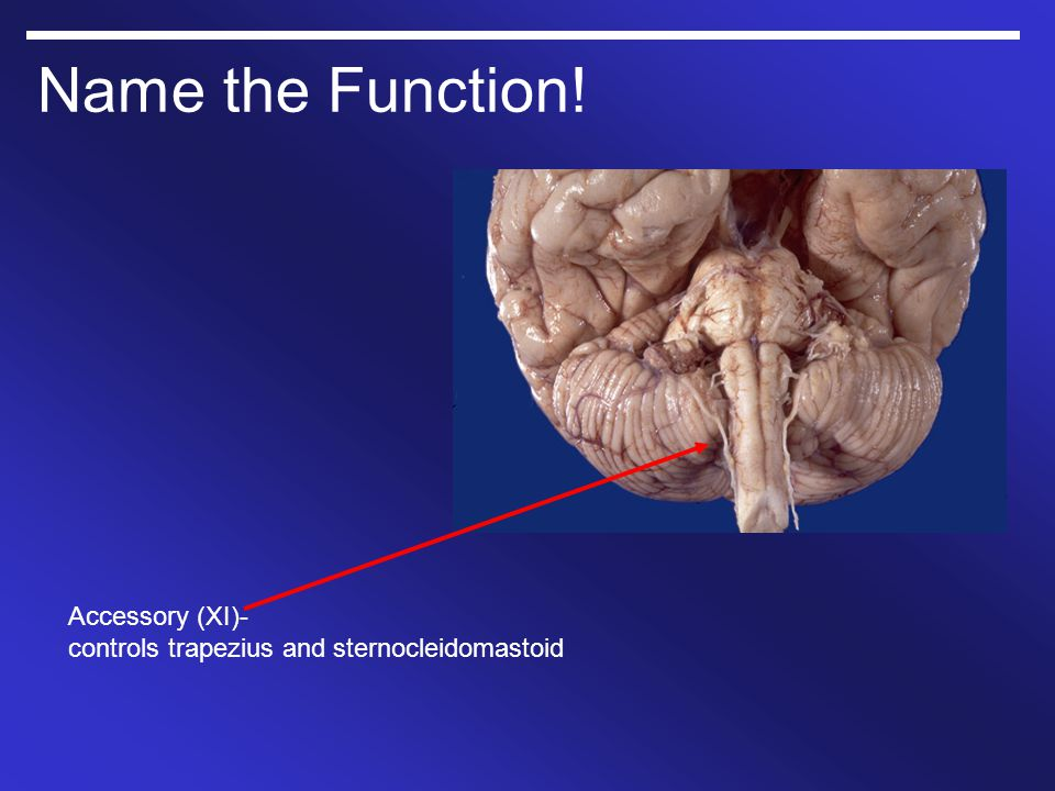 Name the Function! Accessory (XI)- controls trapezius and sternocleidomastoid