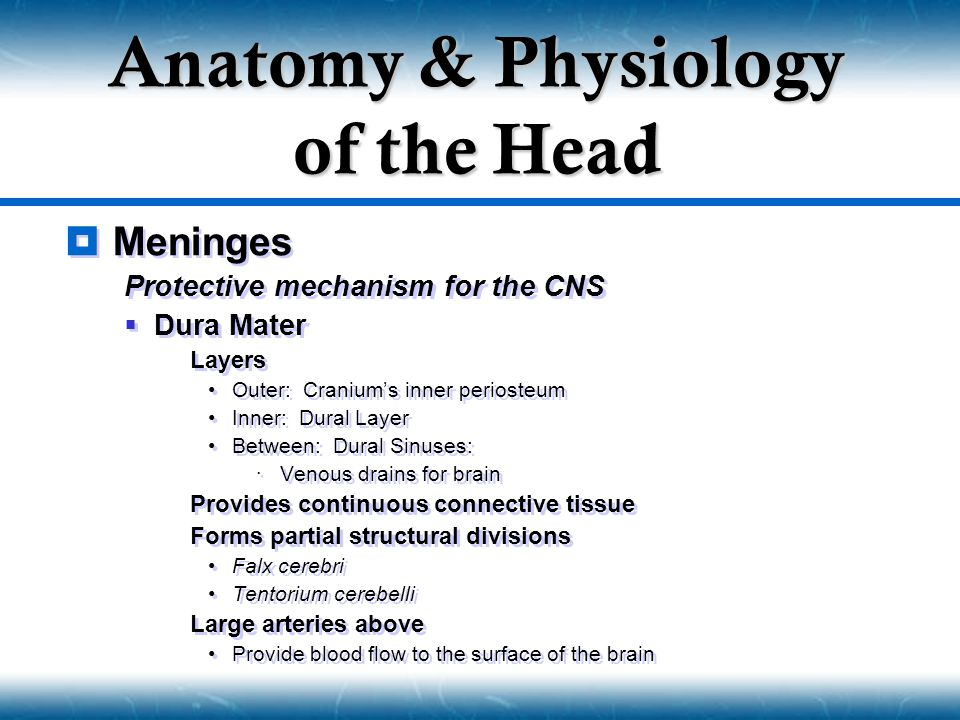  Meninges Protective mechanism for the CNS  Dura Mater  Layers Outer: Cranium's inner periosteum Inner: Dural Layer Between: Dural Sinuses:  Venou