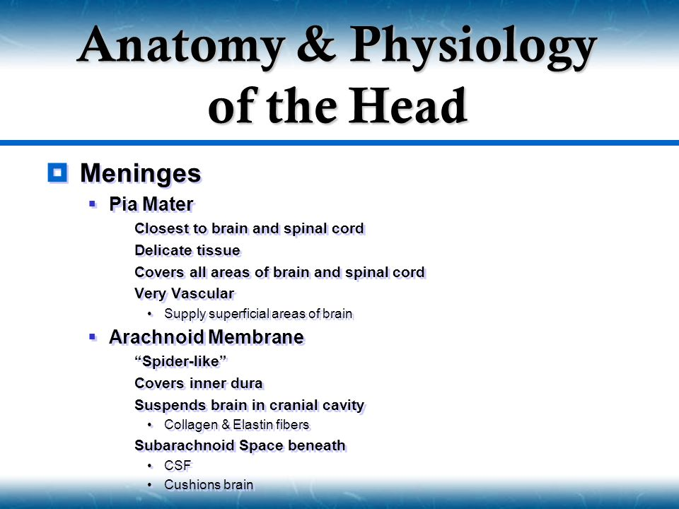  Meninges  Pia Mater  Closest to brain and spinal cord  Delicate tissue  Covers all areas of brain and spinal cord  Very Vascular Supply superfi