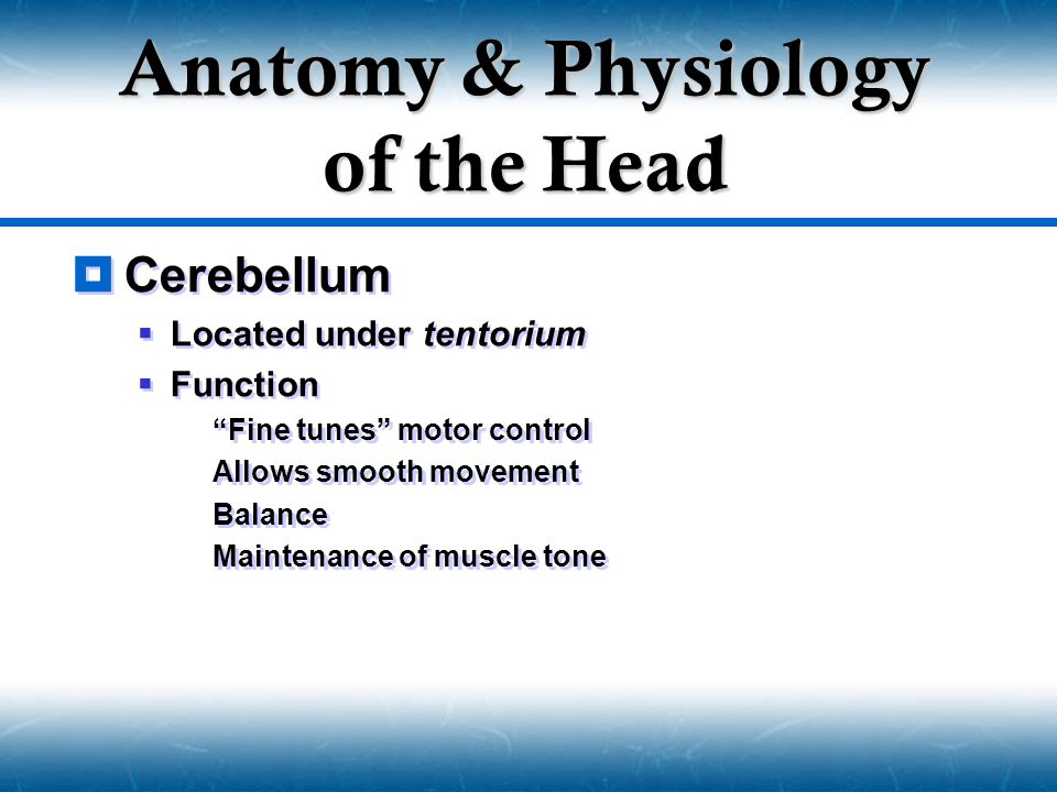 " Cerebellum  Located under tentorium  Function  ""Fine tunes"" motor control  Allows smooth movement  Balance  Maintenance of muscle tone  Cereb"
