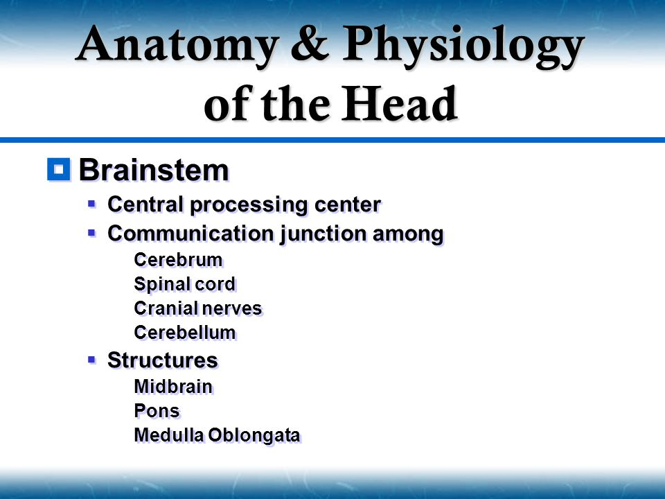  Brainstem  Central processing center  Communication junction among  Cerebrum  Spinal cord  Cranial nerves  Cerebellum  Structures  Midbrain