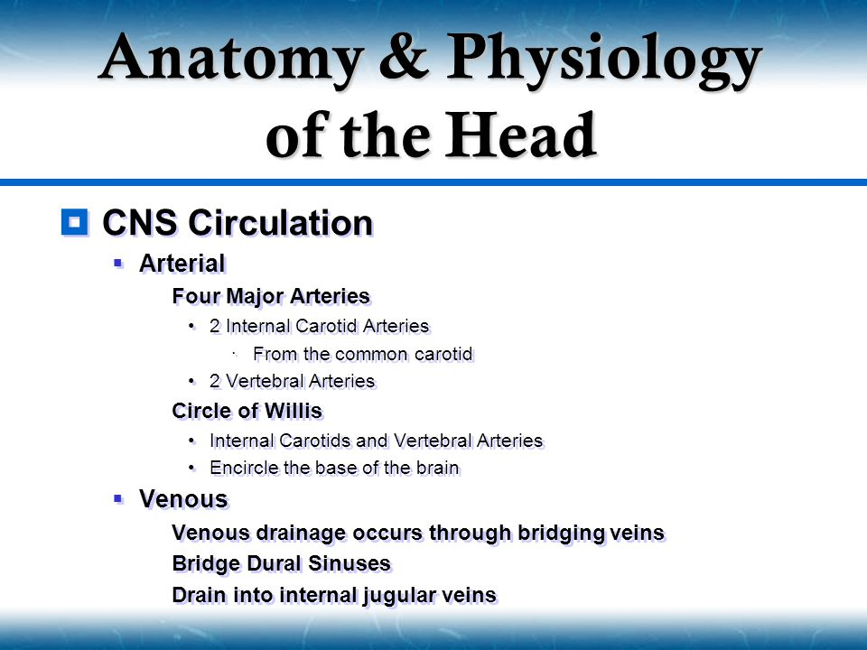  CNS Circulation  Arterial  Four Major Arteries 2 Internal Carotid Arteries  From the common carotid 2 Vertebral Arteries  Circle of Willis Inter