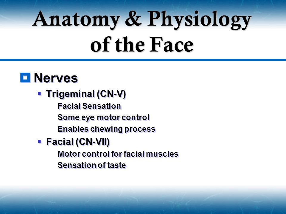  Nerves  Trigeminal (CN-V)  Facial Sensation  Some eye motor control  Enables chewing process  Facial (CN-VII)  Motor control for facial muscle