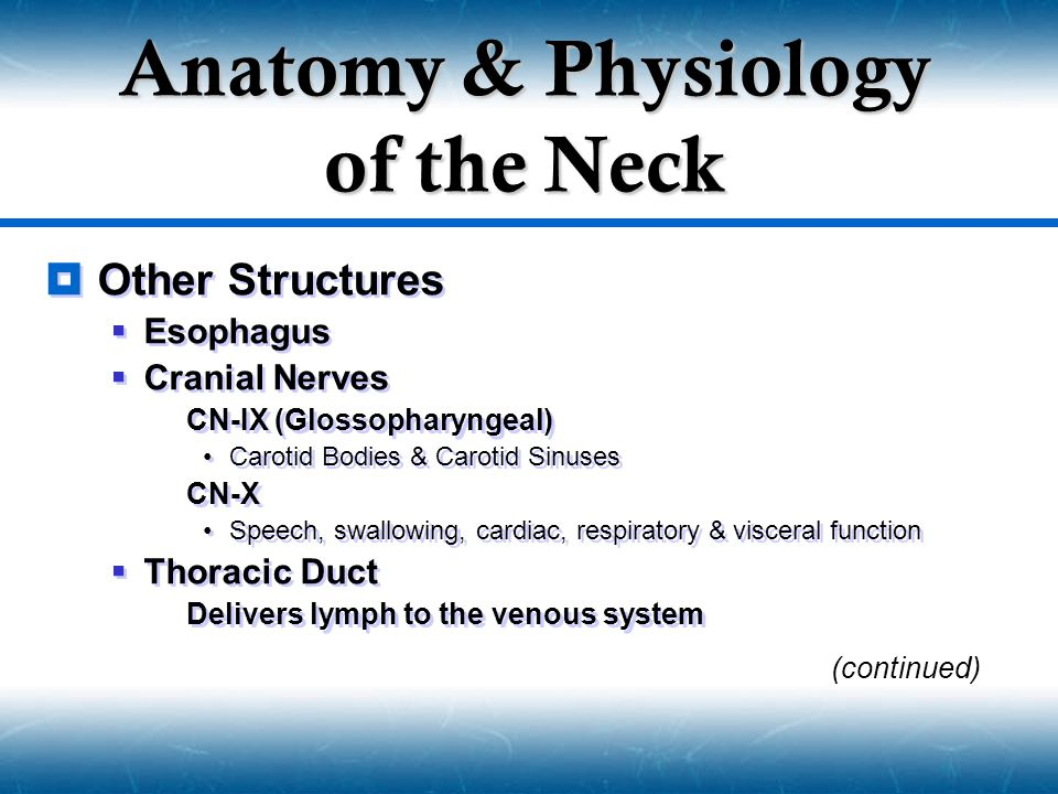  Other Structures  Esophagus  Cranial Nerves  CN-IX (Glossopharyngeal) Carotid Bodies & Carotid Sinuses  CN-X Speech, swallowing, cardiac, respir