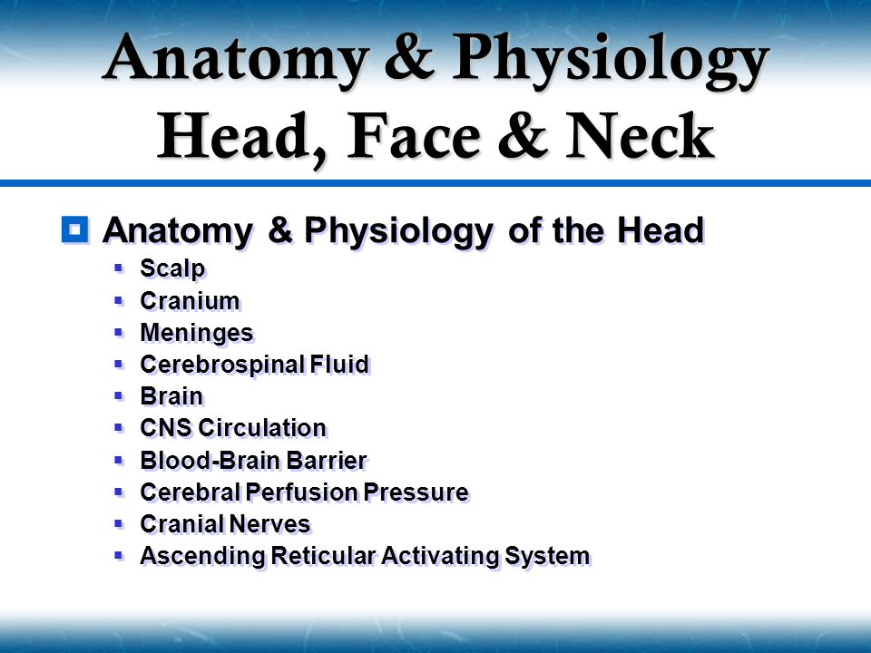  Anatomy & Physiology of the Head  Scalp  Cranium  Meninges  Cerebrospinal Fluid  Brain  CNS Circulation  Blood-Brain Barrier  Cerebral Perfu