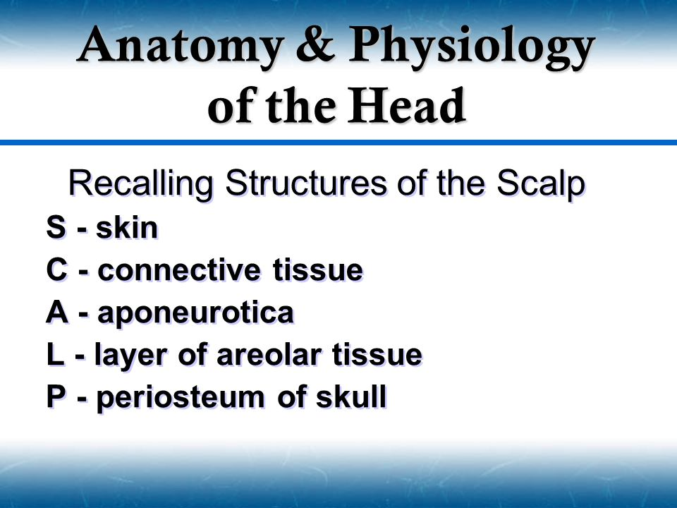 Recalling Structures of the Scalp S - skin C - connective tissue A - aponeurotica L - layer of areolar tissue P - periosteum of skull Recalling Struct