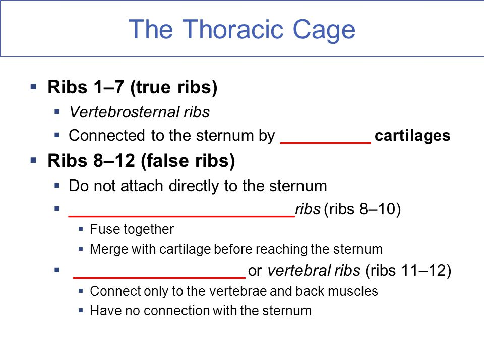 The Thoracic Cage  Ribs 1–7 (true ribs)  Vertebrosternal ribs  Connected to the sternum by __________ cartilages  Ribs 8–12 (false ribs)  Do not attach directly to the sternum  _________________________ribs (ribs 8–10)  Fuse together  Merge with cartilage before reaching the sternum  ___________________ or vertebral ribs (ribs 11–12)  Connect only to the vertebrae and back muscles  Have no connection with the sternum