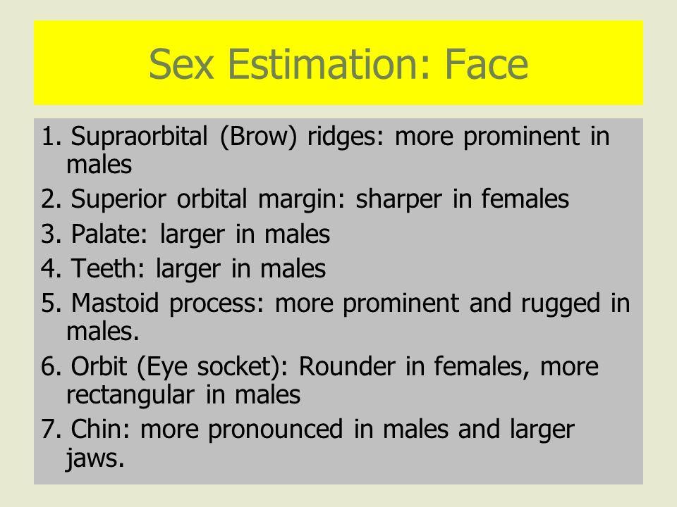 Sex Estimation: Face 1. Supraorbital (Brow) ridges: more prominent in males 2.