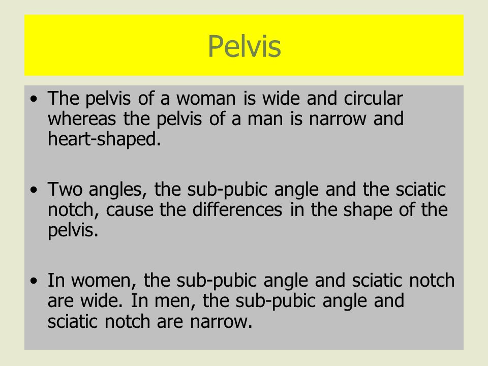 Pelvis The pelvis of a woman is wide and circular whereas the pelvis of a man is narrow and heart-shaped.