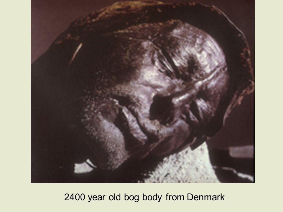 2400 year old bog body from Denmark