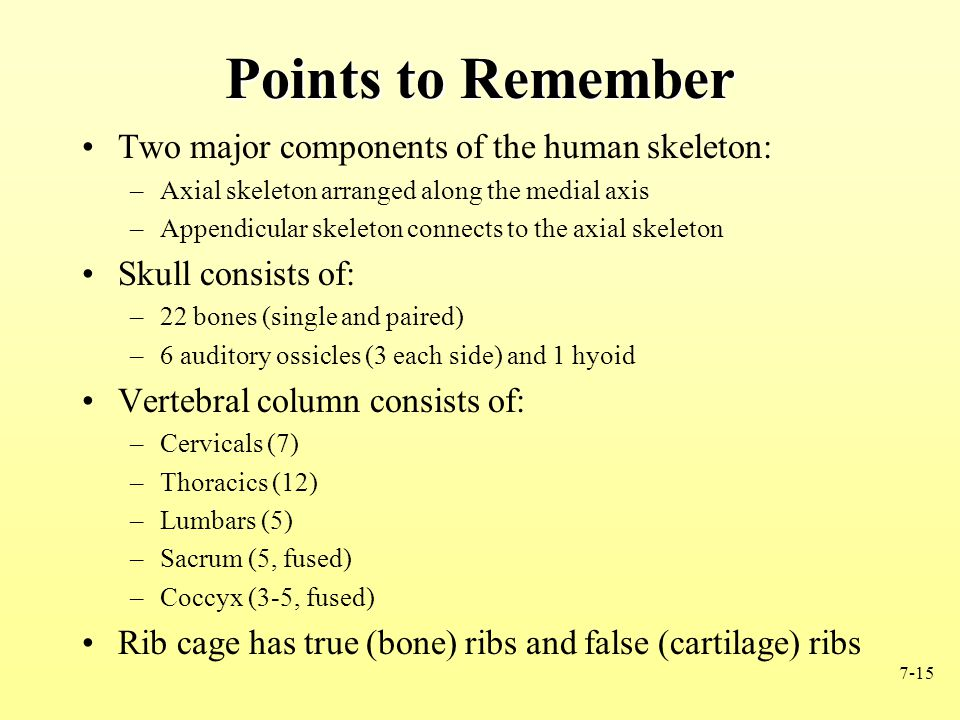 7-15 Points to Remember Two major components of the human skeleton: –Axial skeleton arranged along the medial axis –Appendicular skeleton connects to