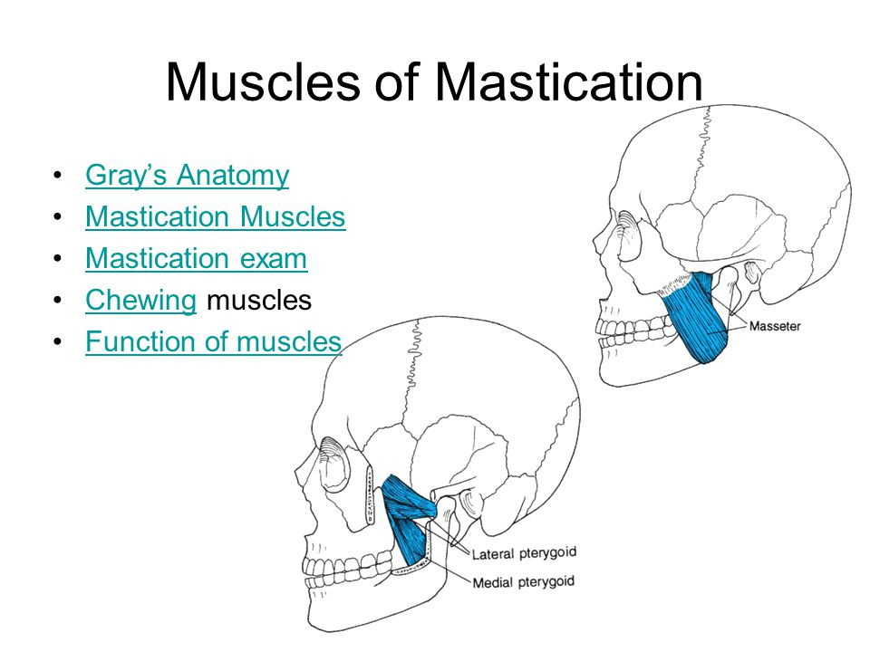 Muscles of Mastication Gray's Anatomy Mastication Muscles Mastication exam Chewing musclesChewing Function of muscles