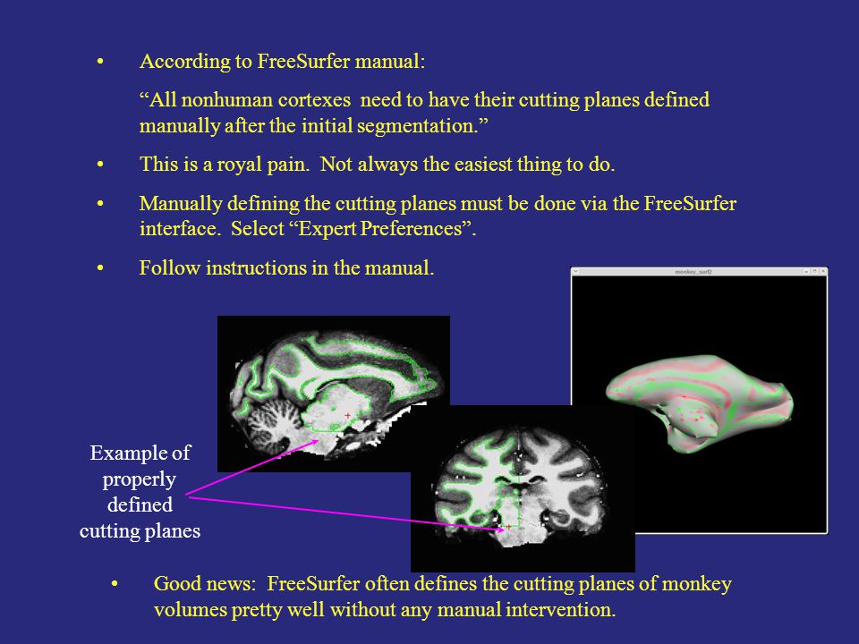 According to FreeSurfer manual: All nonhuman cortexes need to have their cutting planes defined manually after the initial segmentation. This is a royal pain.