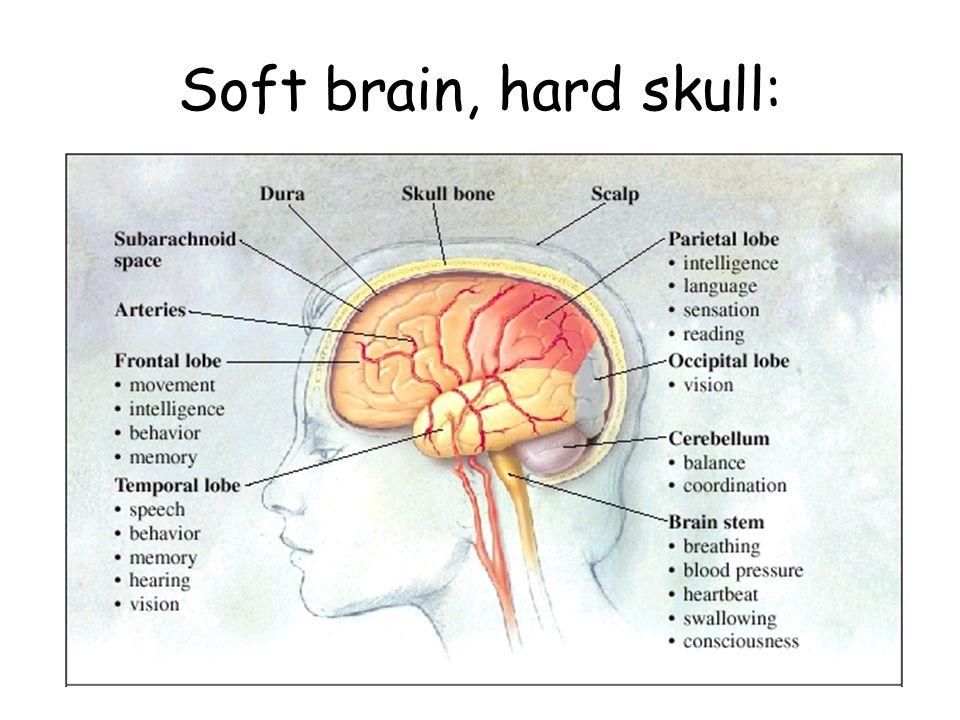 Soft brain, hard skull: