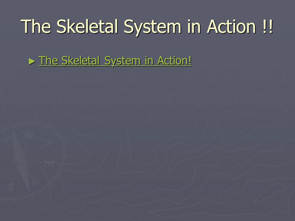 5 Functions of the Skeletal System 1.