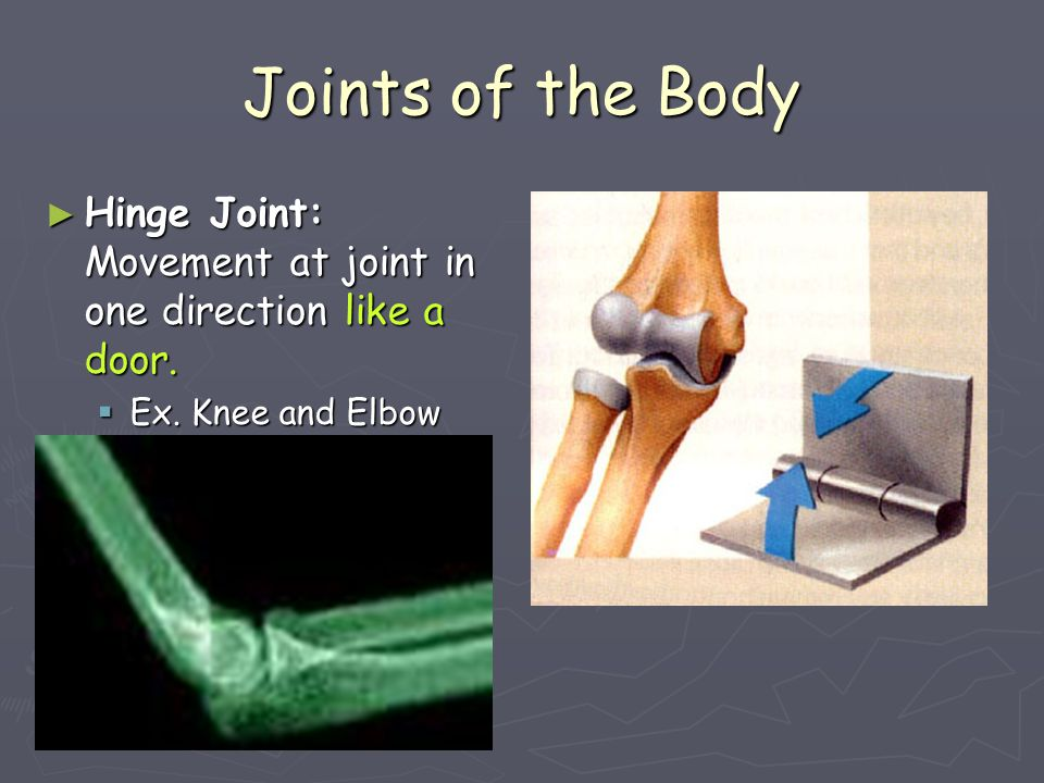 Joints of the Body ► Pivot Joint: Bone resting atop another bone permitting free movement.