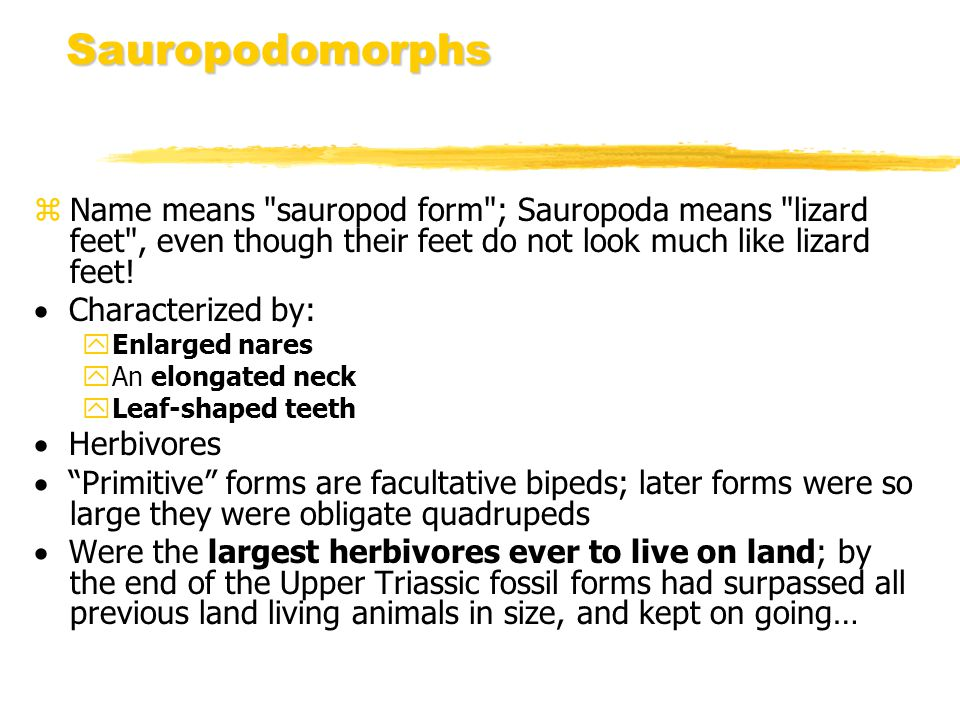 Sauropodomorphs z Name means