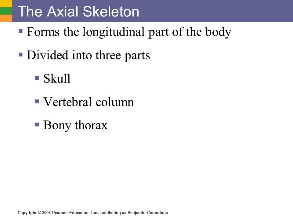 Copyright © 2006 Pearson Education, Inc., publishing as Benjamin Cummings The Axial Skeleton  Forms the longitudinal part of the body  Divided into three parts  Skull  Vertebral column  Bony thorax