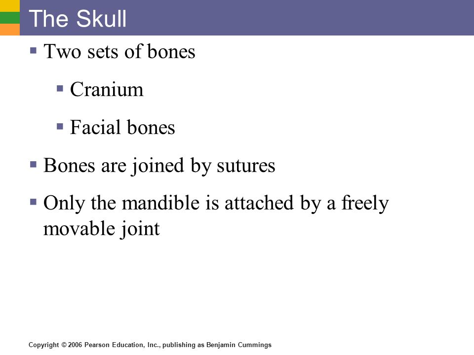 Copyright © 2006 Pearson Education, Inc., publishing as Benjamin Cummings The Skull  Two sets of bones  Cranium  Facial bones  Bones are joined by sutures  Only the mandible is attached by a freely movable joint
