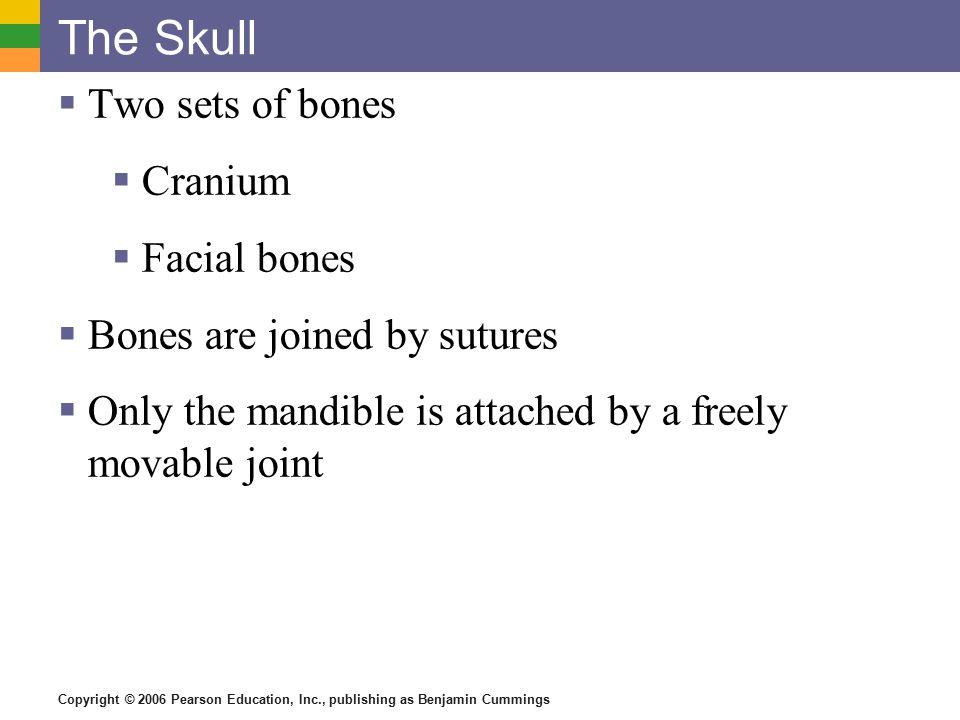 Copyright © 2006 Pearson Education, Inc., publishing as Benjamin Cummings The Skull Figure 5.7