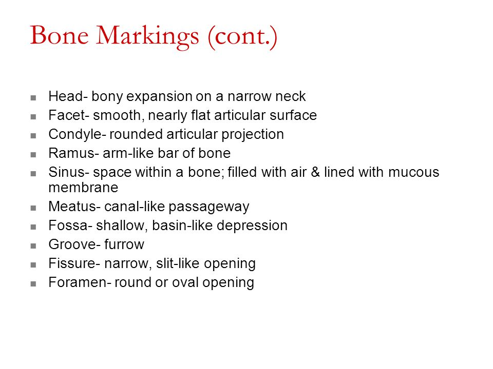 Bone Markings (cont.) Head- bony expansion on a narrow neck Facet- smooth, nearly flat articular surface Condyle- rounded articular projection Ramus-