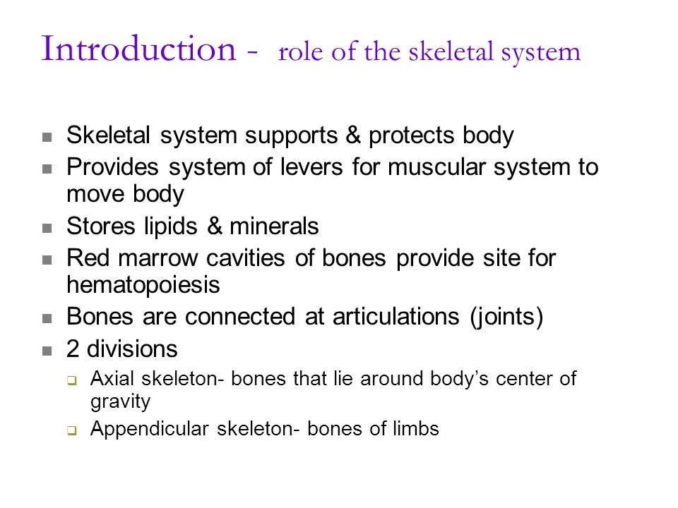 Introduction - role of the skeletal system Skeletal system supports & protects body Provides system of levers for muscular system to move body Stores