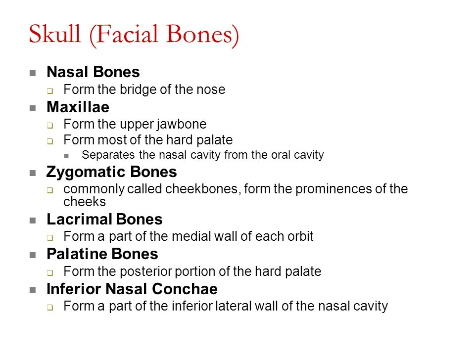 Skull (Facial Bones) Nasal Bones  Form the bridge of the nose Maxillae  Form the upper jawbone  Form most of the hard palate Separates the nasal ca