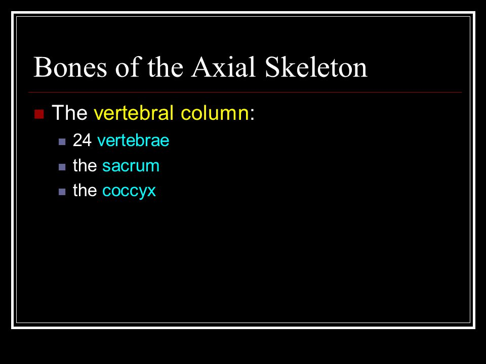 Bones of the Axial Skeleton The vertebral column: 24 vertebrae the sacrum the coccyx