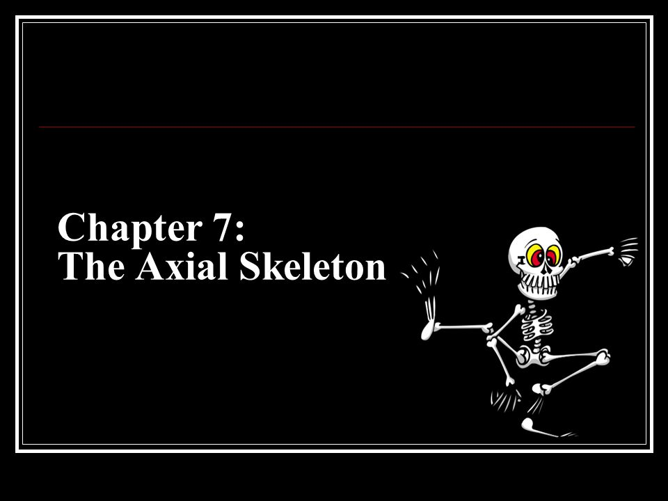 Chapter 7: The Axial Skeleton