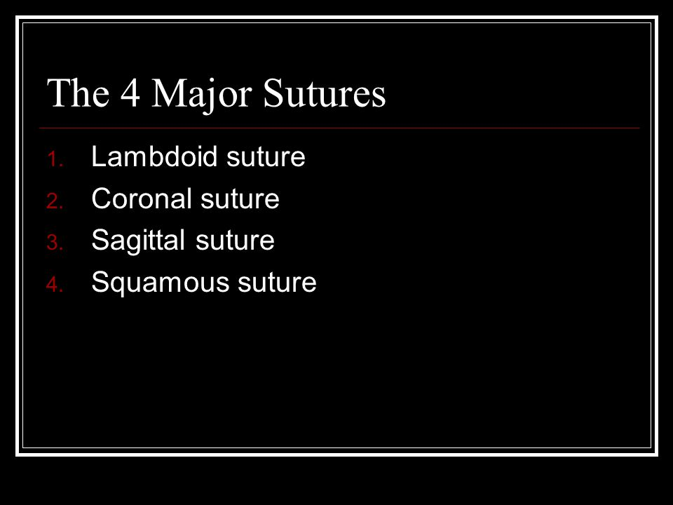 The 4 Major Sutures 1. Lambdoid suture 2. Coronal suture 3. Sagittal suture 4. Squamous suture