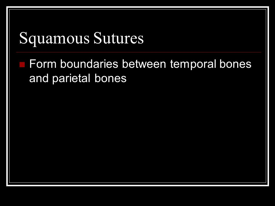 Squamous Sutures Form boundaries between temporal bones and parietal bones