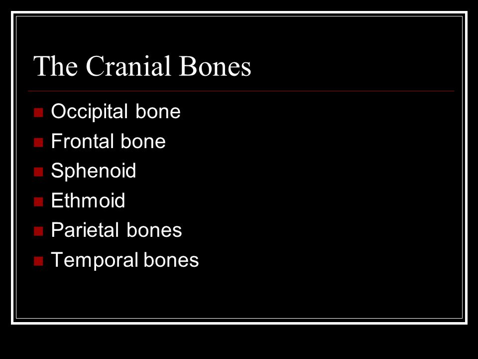 The Cranial Bones Occipital bone Frontal bone Sphenoid Ethmoid Parietal bones Temporal bones
