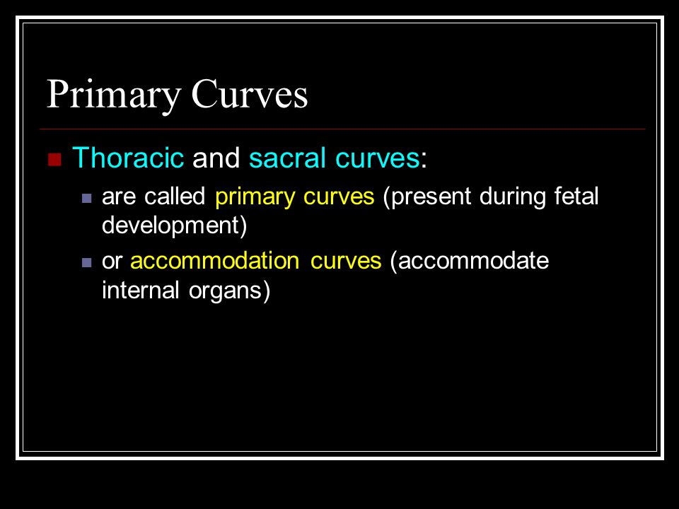 Primary Curves Thoracic and sacral curves: are called primary curves (present during fetal development) or accommodation curves (accommodate internal organs)