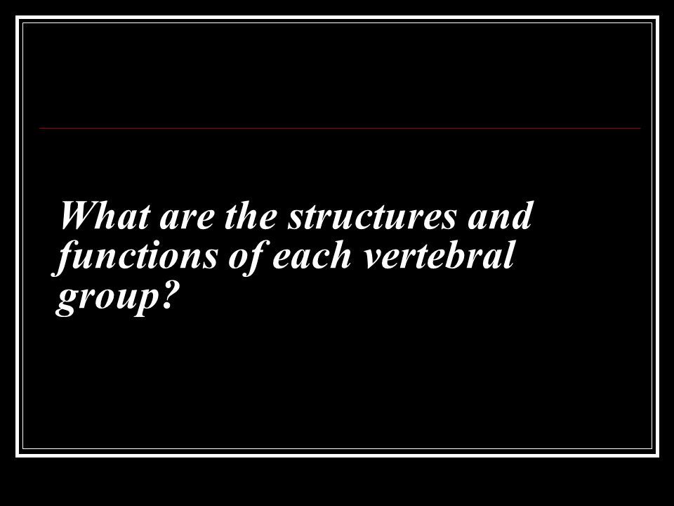 What are the structures and functions of each vertebral group