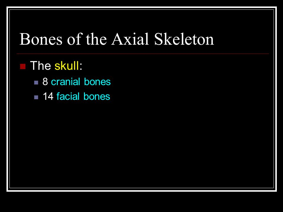 Bones of the Axial Skeleton The skull: 8 cranial bones 14 facial bones