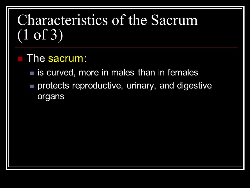 Characteristics of the Sacrum (1 of 3) The sacrum: is curved, more in males than in females protects reproductive, urinary, and digestive organs