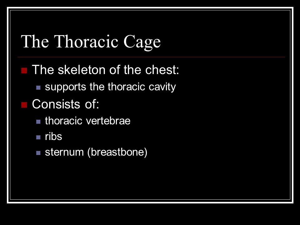 The Thoracic Cage The skeleton of the chest: supports the thoracic cavity Consists of: thoracic vertebrae ribs sternum (breastbone)