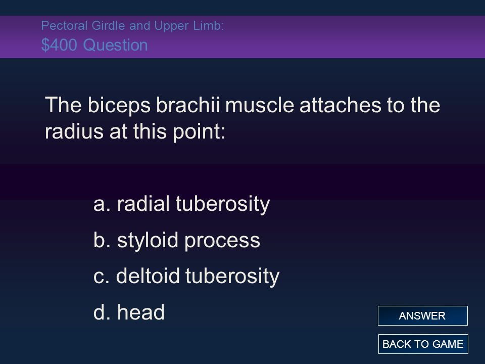 Pectoral Girdle and Upper Limb: $400 Question The biceps brachii muscle attaches to the radius at this point: a. radial tuberosity b. styloid process