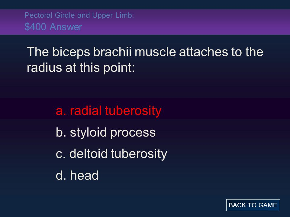 Pectoral Girdle and Upper Limb: $400 Answer The biceps brachii muscle attaches to the radius at this point: a. radial tuberosity b. styloid process c.