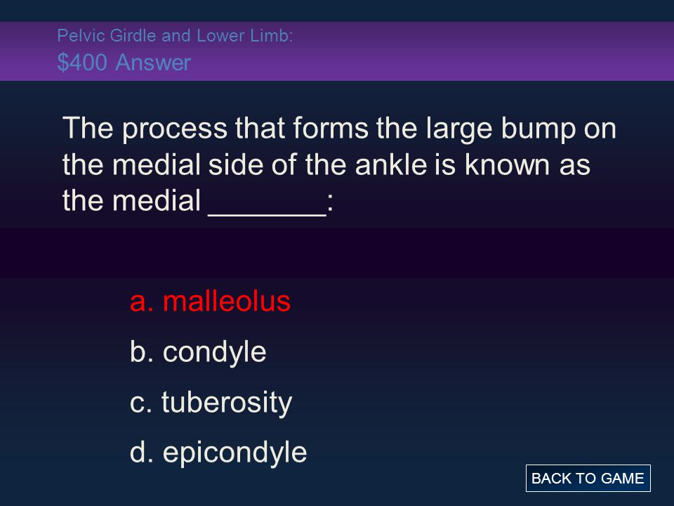 Pelvic Girdle and Lower Limb: $400 Answer The process that forms the large bump on the medial side of the ankle is known as the medial _______: a.