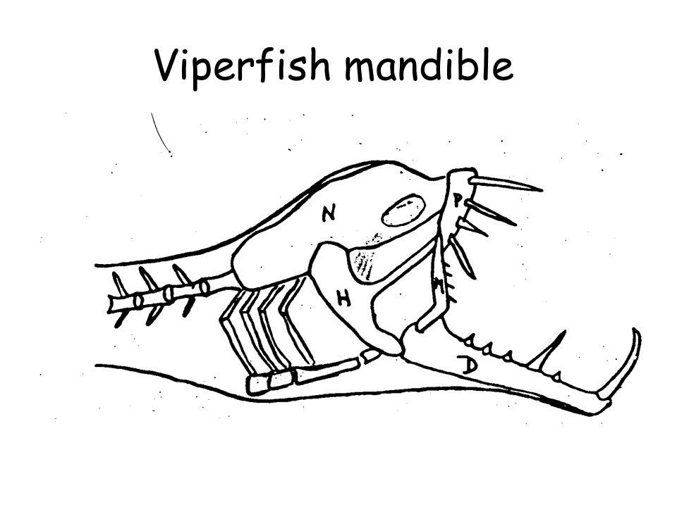 Viperfish mandible