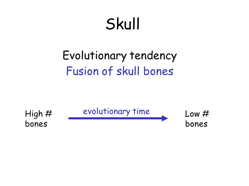 Skull Evolutionary tendency Fusion of skull bones evolutionary time High # bones Low # bones