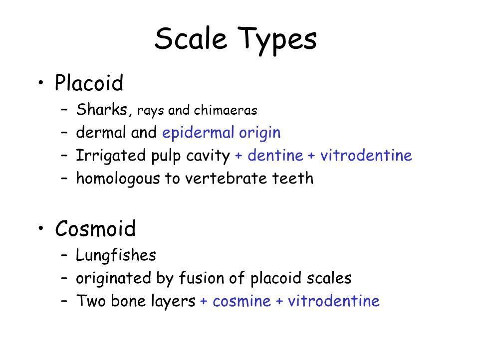 Scale Types Placoid –Sharks, rays and chimaeras –dermal and epidermal origin –Irrigated pulp cavity + dentine + vitrodentine –homologous to vertebrate