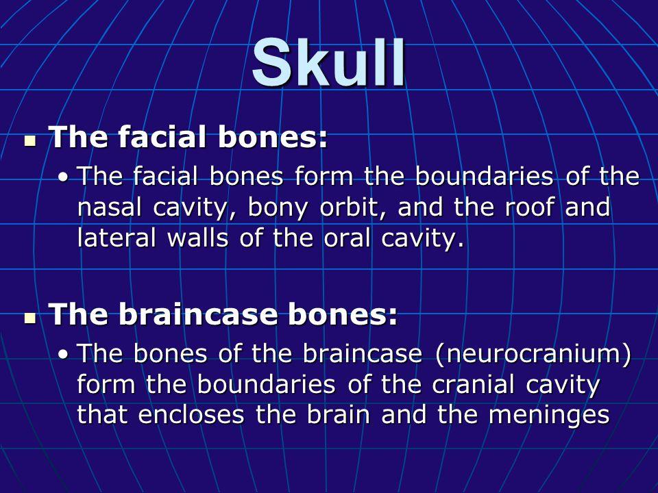 The facial bones The facial bones can be classified into two groups: The facial bones can be classified into two groups: A.