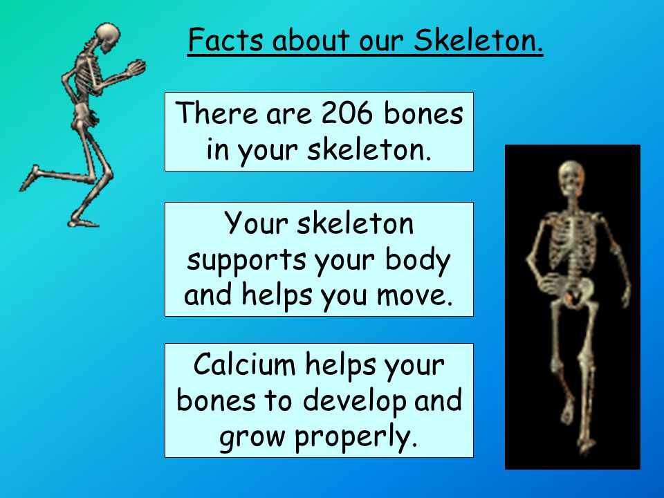 Facts about our Skeleton.There are tiny bones in your ears.