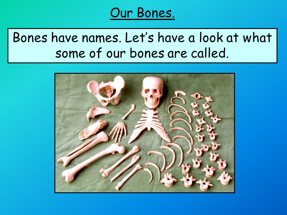 Our Bones. Bones have names. Let's have a look at what some of our bones are called.